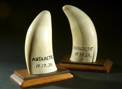 Whale's teeth
